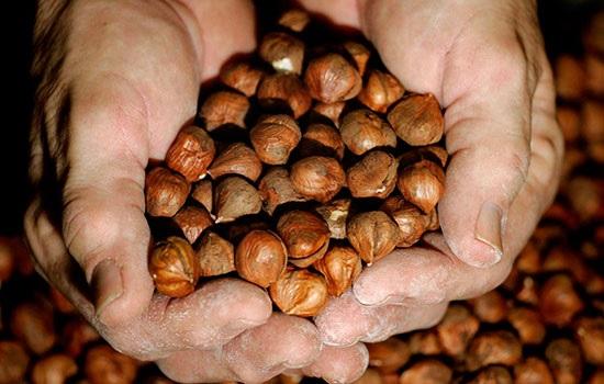 Орду в Турции приглашает всех любителей лесных орехов