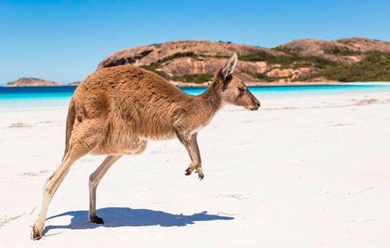 Путешествие в Австралию: практические советы