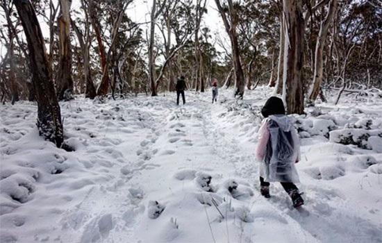 Пока мы наслаждаемся теплыми солнечнми лучами, Австралия переживает небольшой ледниковый период