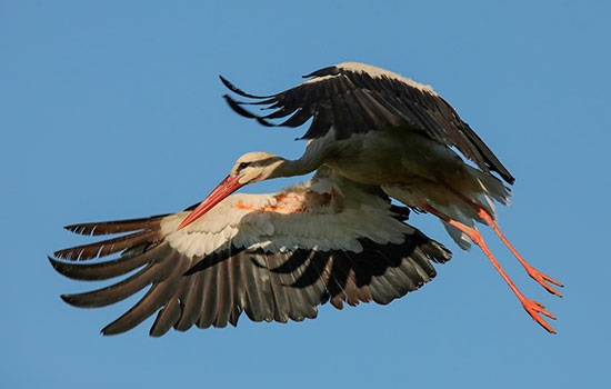 На озеро Ван стекаются туристы, чтобы понаблюдать за многочисленными видами птиц