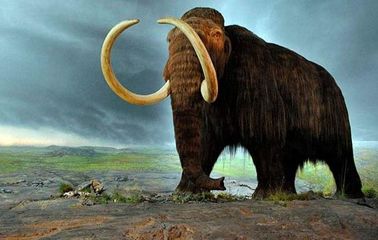Фермер обнаруживает 8 миллионов летние ископаемые мамонтов в центральной Турции