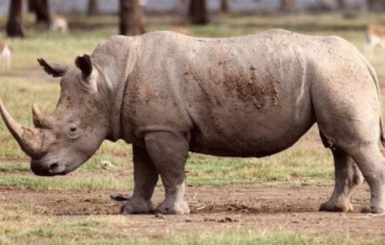 Кризис браконьерства в Африке превращается в трагедию