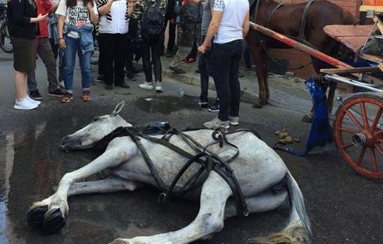 Активисты требуют запрета на конные экипажи на Буюкаде в Стамбуле