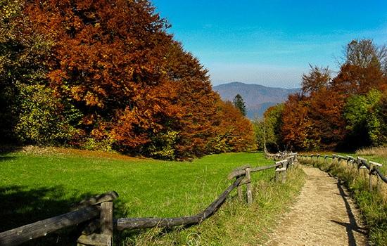 Почему осенью полезен пеший туризм?