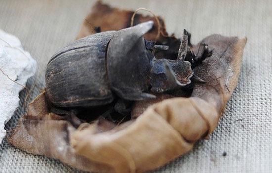 Редкие мумифицированные жуки-скарабеи найдены в древних египетских гробницах