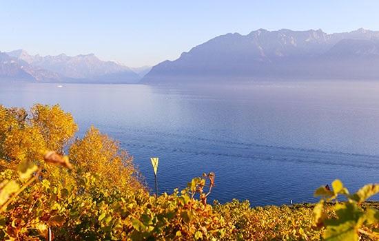 Виноградники Лаво в Швейцарии — идеальное место для путешествия