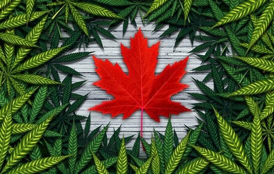 Марихуана открыла новые возможности для привлечения туристов в Канаду