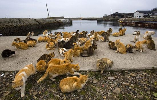 Японский остров Аосима — рай для любителей кошек