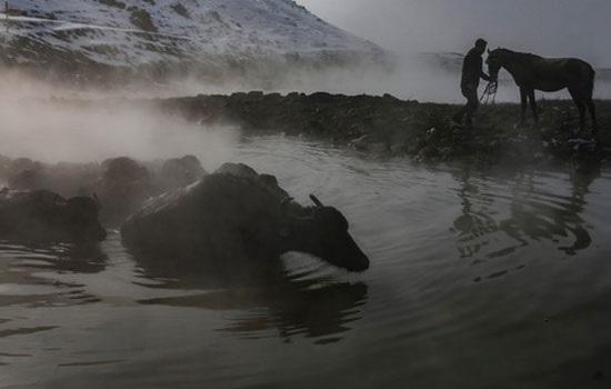 В горячих источниках Битлиса в восточной Турции купаются не только люди, но и буйволы