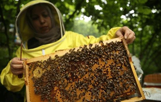 Турция — вторая по величине страна пчеловодства после Китая