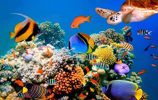 Возрождение египетского туризма угрожает экосистеме Красного моря