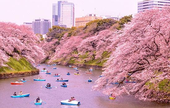 Япония обеспокоена наплывом туристов