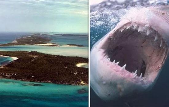 На Багамских островах впервые за десятилетие группа акул убила 21-летнюю женщину