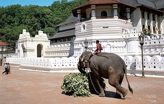 Шри-Ланка представляет новые турпакеты для развития туризма