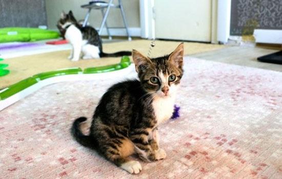 Пятизвездочный отель для кошек в Турции
