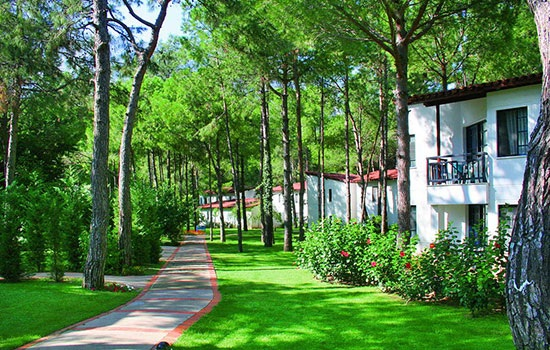 В Турции скоро будет праздник посадки деревьев