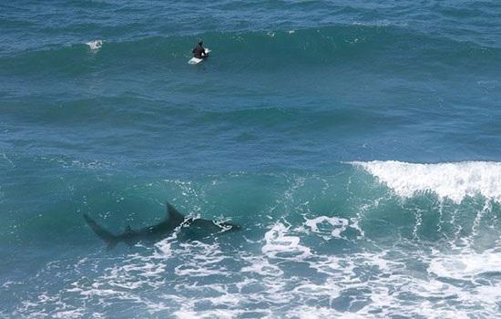 Что вам нужно знать, чтобы предотвратить или пережить атаку акул