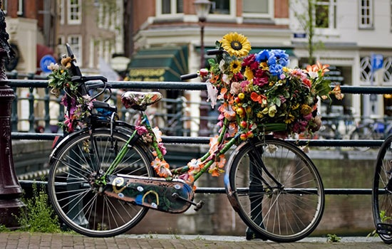 Амстердам: прогулка по городу