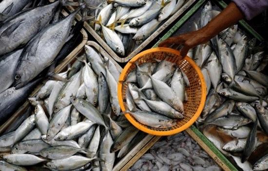 Изменение климата повышает уровень токсичной ртути в рыбе