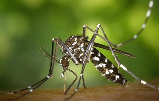 Тропические комары угрожают россиянам смертельными заболеваниями