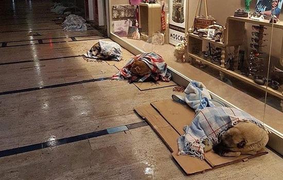 Отношении в Турции к бездомных кошкам и собакам