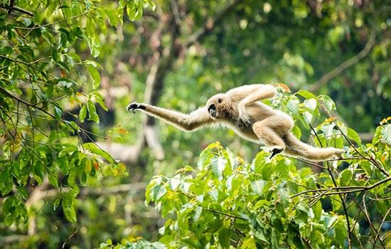 Туристические поездки к диким слонам в национальном парке Кхао Яй в Таиланде