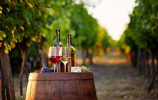 Виноградники Венгрии