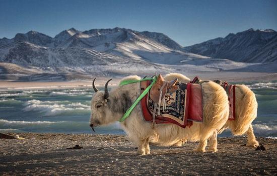 Тибет запускает политику поддержки зимнего туризма
