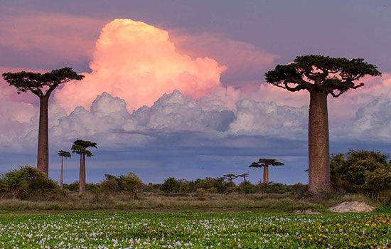 Отпуск на Мадагаскаре