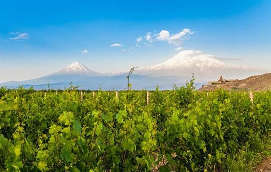Дни вина в Ереване