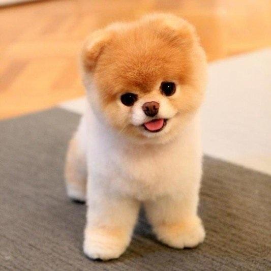 Собачья любовь. Учёные выяснили, почему собаки так преданны и любят своих хозяев