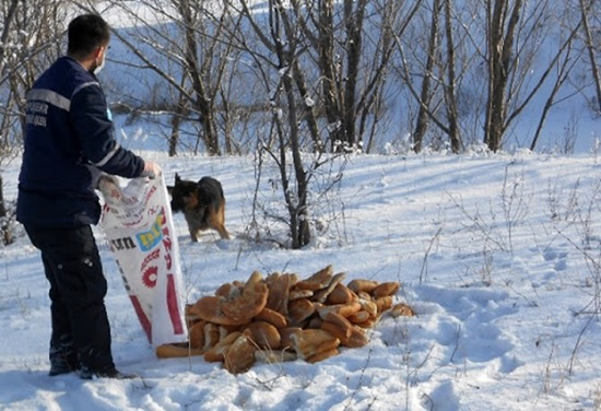 В турецком городе Нигде была построена «деревня для собак»