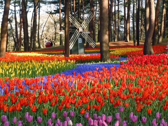 Национальный парк Хитачи, Япония