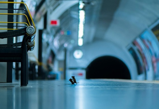 Бой мышей в метро Лондона получил главный приз публики