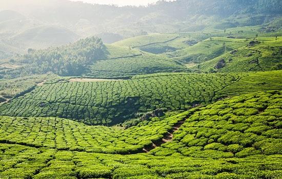 Увлекательный уголок Индии — Керала