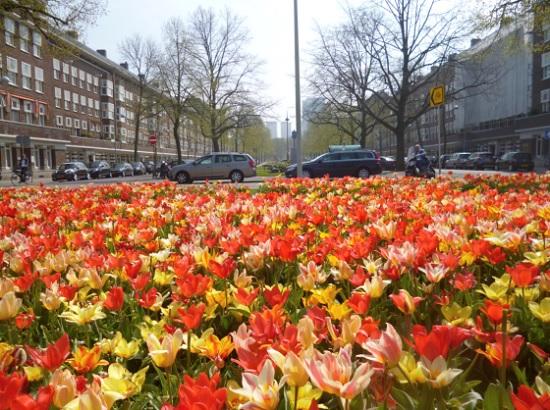 Нидерланды проведут фестиваль тюльпанов в онлайн-режиме
