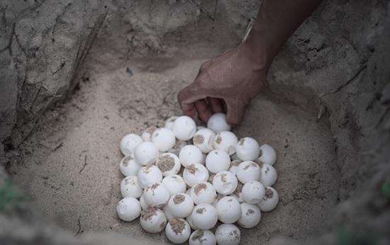 Удивительная находка на пляже Турецкой Ривьеры - необычные яйца в песке