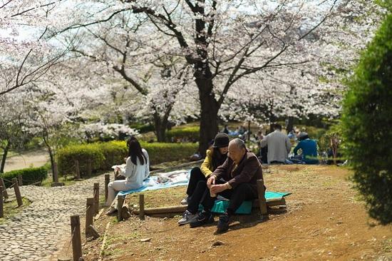 Путеводитель по районам Токио