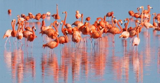 Многочисленные стаи фламинго привлекают туристов и фотографов в турецкий залив