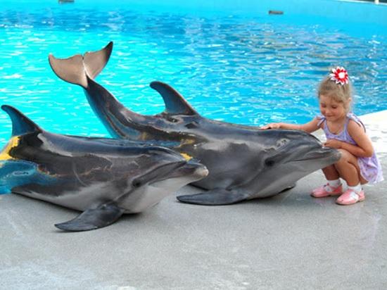 Экскурсия в дельфинарий в Анталии — незабываемое переключение для детей и взрослых