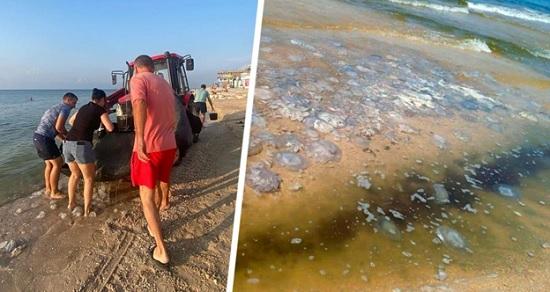 На популярном российском курорте медузы закрыли туристам доступ к морю