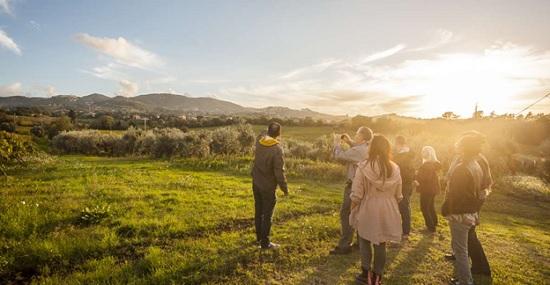 Экскурсия по виноградникам Рима — прикоснитесь к секретам римского виноделия