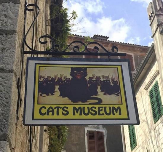 Город Котор в Черногории — узнайте все о знаменитом городе кошек