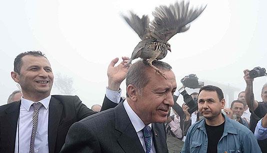 куропатка на голове Эрдогана