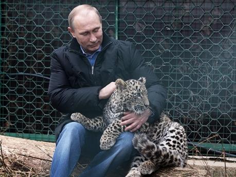 путин в сочинском питомнике леопардов