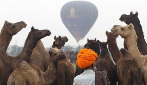 ярмарка верблюдов в Раджастхане