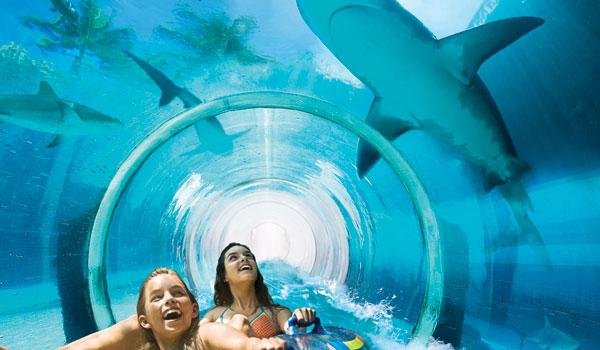 путешествие сквозь бассейн с акулами