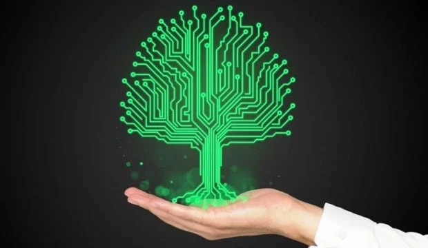 Ученые сделали из растений компьютеры, превратив стебли в провода