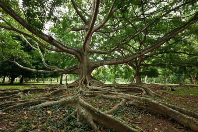Природные ландшафты Сада