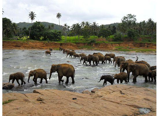 слоны чувствуют себя в заповеднике вольготно